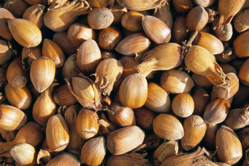 Kentish Cobnuts Association - Become A Member Today...